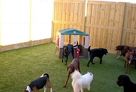 indoor-dogpark1