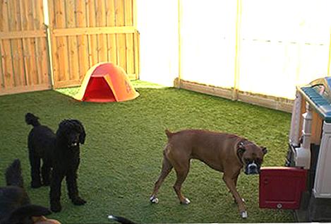 inndor-dogpark2