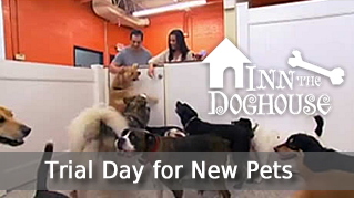 Trial day for pets new to ITD