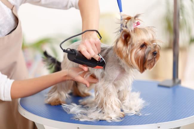 Pet spa inn the dog house for The dog house pet salon